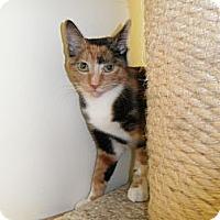 Adopt A Pet :: Jazlyn - Milwaukee, WI