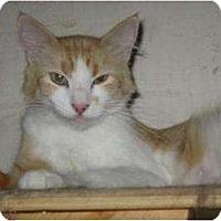 Adopt A Pet :: Lovey - Phoenix, AZ