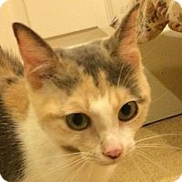 Adopt A Pet :: Emerald - Winchester, CA