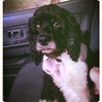 Adopt A Pet :: Rocci - Alpharetta, GA