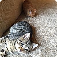Adopt A Pet :: Jack - Fairborn, OH
