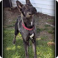 Adopt A Pet :: Maya - Indian Trail, NC