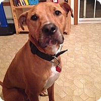 Adopt A Pet :: Bane - Pending Adoption - Lancaster, PA