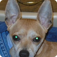 Adopt A Pet :: Bo - MINNEAPOLIS, KS