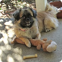 Adopt A Pet :: Amalie - Studio City, CA