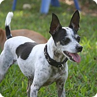 Adopt A Pet :: Katie - Palmetto Bay, FL