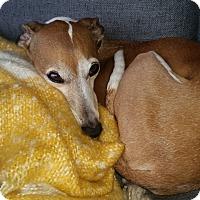 Adopt A Pet :: Dusty - LA - San Diego, CA