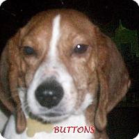 Adopt A Pet :: BUTTONS - Ventnor City, NJ
