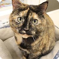 Adopt A Pet :: Molly - Medina, OH