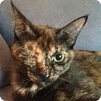 Adopt A Pet :: Freedom - Toronto, ON