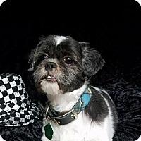 Adopt A Pet :: Bernie Turner - Urbana, OH