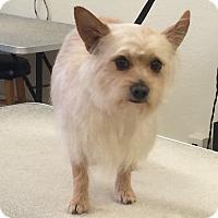 Adopt A Pet :: Jordy - Lodi, CA