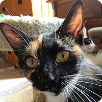 Adopt A Pet :: Marabelle - Fairfax, VA