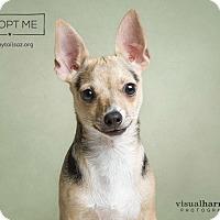 Adopt A Pet :: Levi - Chandler, AZ