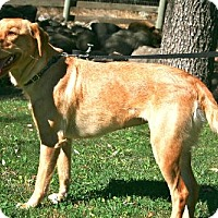 Adopt A Pet :: Stella Bella - Penngrove, CA