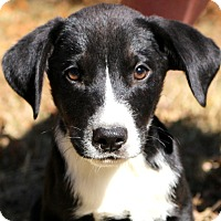 Adopt A Pet :: Luigi~adopted! - Glastonbury, CT