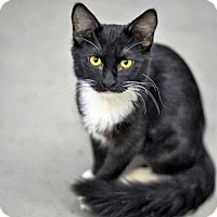 Domestic Longhair Cat for adoption in Milwaukee, Wisconsin - Winnie
