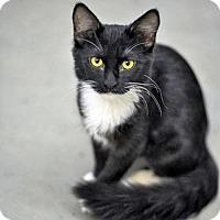 Adopt A Pet :: Winnie - Milwaukee, WI