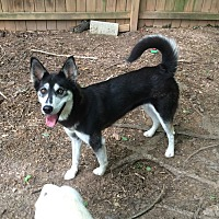 Husky Mix Dog for adoption in Acworth, Georgia - Lucinda (Lucy)