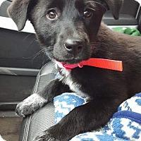 Adopt A Pet :: Raleigh - Princeton, MN