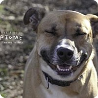 Adopt A Pet :: Barney - Edwardsville, IL