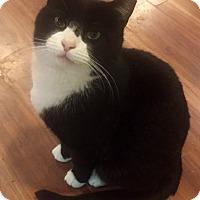 Adopt A Pet :: Johnny - Harrison, NY