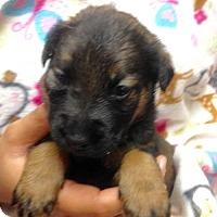 Adopt A Pet :: 11 PUPS - WINNIE - Colton, CA