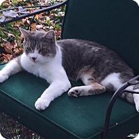Adopt A Pet :: Watson - Joplin, MO