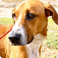 Adopt A Pet :: Laid Back and Cool!!! - Ft Myers Beach, FL