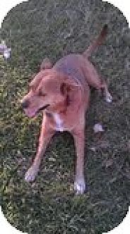 Shepherd (Unknown Type) Mix Dog for adoption in Miami, Florida - Misty