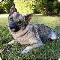Adopt A Pet :: Pippi - Mocksville, NC