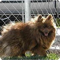 Adopt A Pet :: Skippy - Meridian, ID