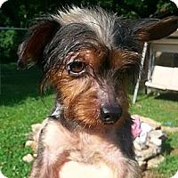 Adopt A Pet :: McDuff - Russellville, KY