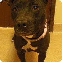 Adopt A Pet :: Sasha - Gary, IN