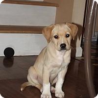 Adopt A Pet :: Sandee - Huntsville, TN