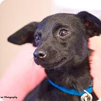 Adopt A Pet :: Alfie - Marietta, GA