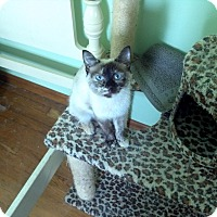 Adopt A Pet :: Jasmine - Saint Albans, WV