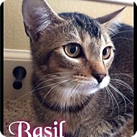 Adopt A Pet :: Basil - Foster 2015 - Maumelle, AR