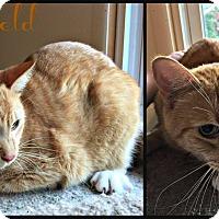 Adopt A Pet :: Garfield - Hanna City, IL