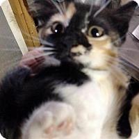 Adopt A Pet :: Aubry (KJ) - Orlando, FL
