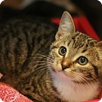 Adopt A Pet :: Rebecca - Canoga Park, CA