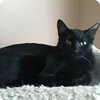 Adopt A Pet :: Raven - East Brunswick, NJ