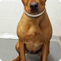 Adopt A Pet :: Lizzy - Channahon, IL