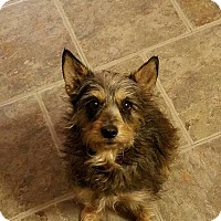 Adopt A Pet :: Thumper - Tomah, WI