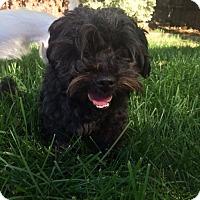 Adopt A Pet :: Cammie - Vacaville, CA