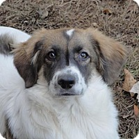 Adopt A Pet :: Ian - Effort, PA