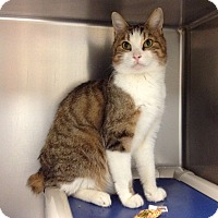 Adopt A Pet :: T-8 Monkey - Triadelphia, WV