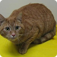 Adopt A Pet :: Mufasa - Gary, IN