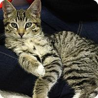 Adopt A Pet :: Axel - Orange, CA