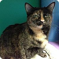 Adopt A Pet :: Olive - Topeka, KS